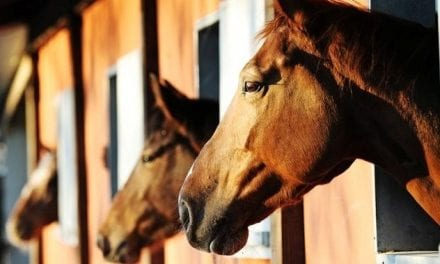Horses and Dementia . . . Are They Nuts?