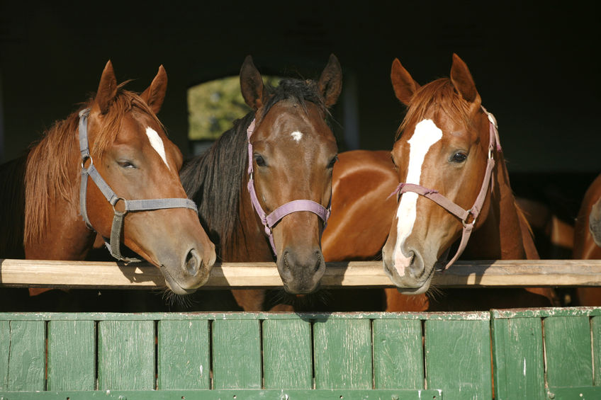 $20,000, Horses, Dementia and Senior Living . . . What Do You Think?