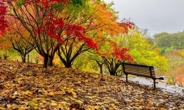 1 Green Bench + 200 Conversations = A Successful Elder Wisdom Campaign