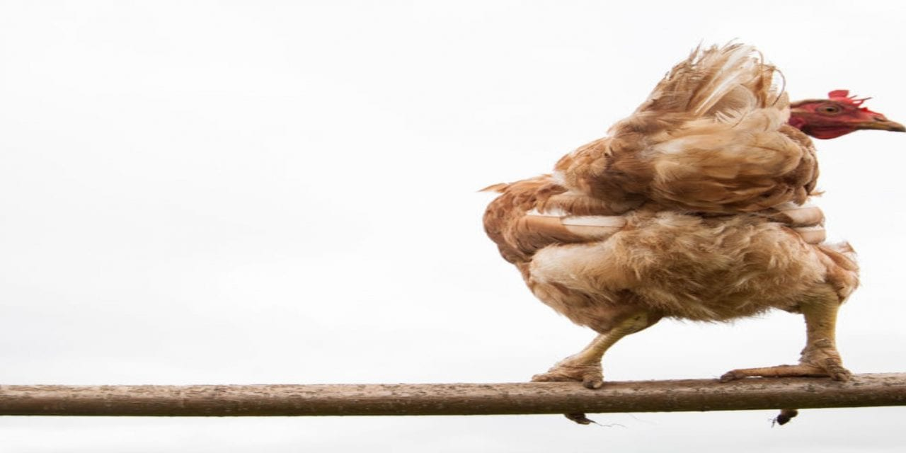 Part 2: The REIT Chickens Come Home to Roost