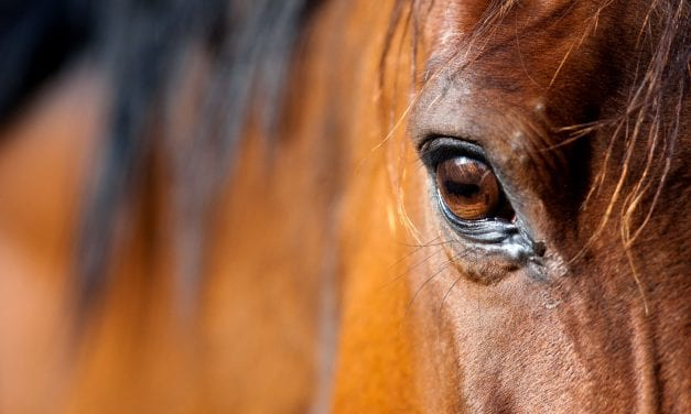 Will Horses Disrupt Assisted Living Memory Care?