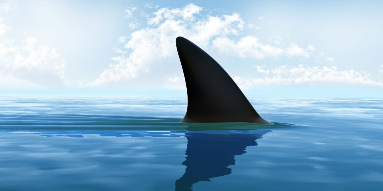 Why Sharks Are Healthy For Senior Living