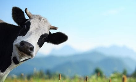How the Sacred Cows of Senior Living Squash Innovation and Growth in Your Team