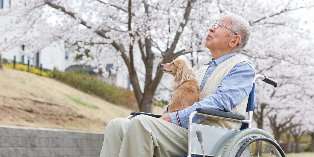 Elderly Hostility — Could This Impact Everything?